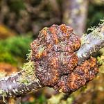 Tierra del Fuego_Trees-6