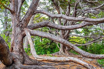Tierra del Fuego_Trees-2