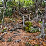 Tierra del Fuego_Trees-1