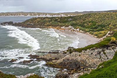 Gypsy Cove_Falkland Islands-2