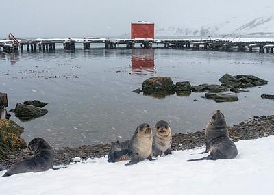 Grytviken_South Georgia-4
