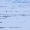 Just when were turning around an Emperor penguin was spotted in the distance