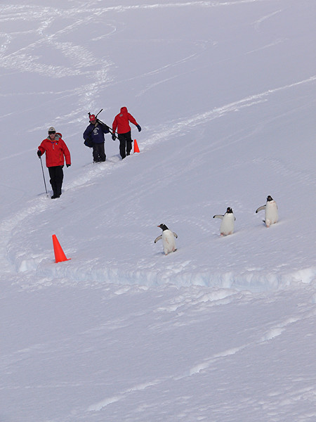 Penguins and people