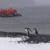 Penguins and zodiac