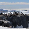 These lucky early penguins got the rocks for their nests, the others still had snow
