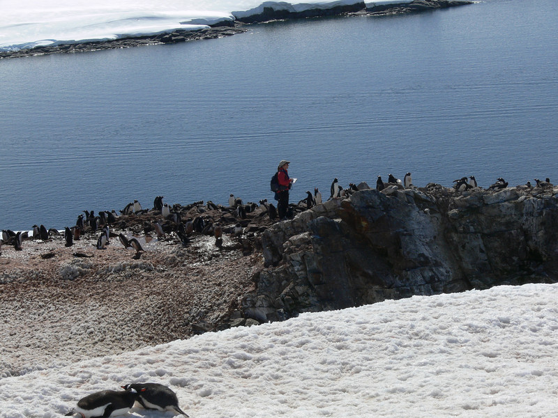 Elise, from Oceanites, counting penguin nests