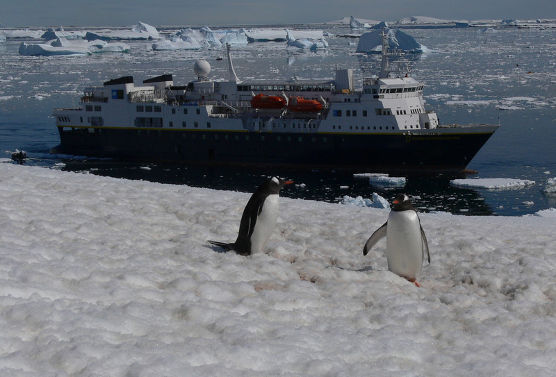 Penguins and the boat