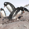 Our group went to Jougla Point first. Gentoo and egg.