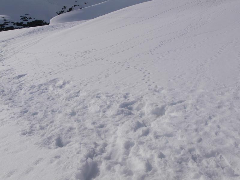 More penguin tracks