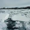Short zodiac ride before landing on Petermann Island