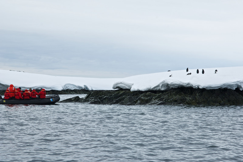 Chinstrap penguins and Zodiac