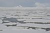 Pack Ice, Gerlache Strait