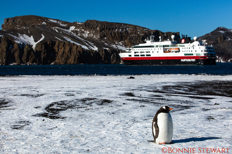 Penguin at Deception Island, Landing #5, a volcanic crater.  There were gale force winds that almost stopped our landing.  MS Fram is in the background.