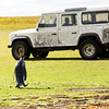King Penguin heads over to the jeep to check it out