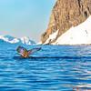 Whale Fluke near Couverville Landing #4