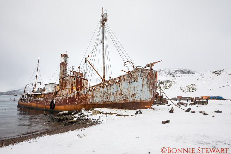 An Old ship in Grytviken's harbor.   None of the whaling towns have been dismantled or preserved.   Eventually they will fall in complete disrepair.   Grytviken has some buildings that are being used.