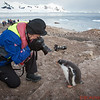 I am taking a photo of the baby Gentoo.   The camera in the background was supposed to be a prop but when I turned around the baby Gentoo was following me.   John Dambik took this photo.   Thanks John!