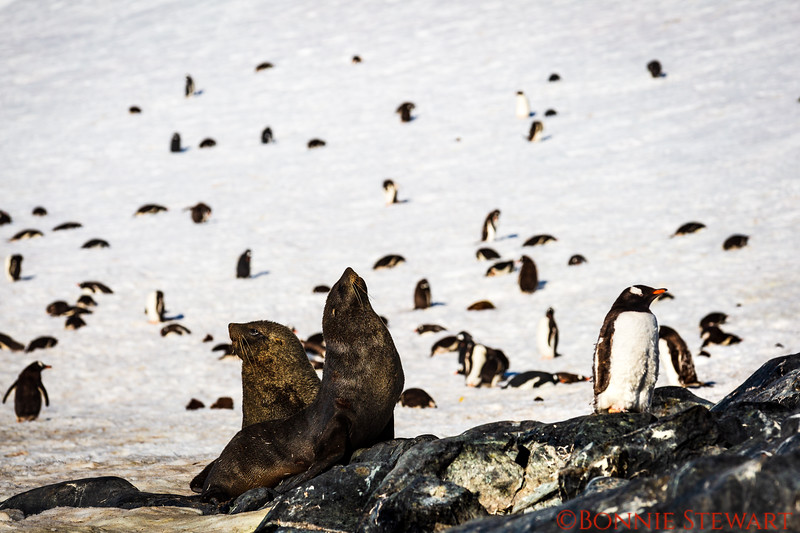 Seals and Penguins