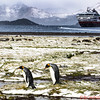 View of the Penguins, the MS Fram with a beautiful background at Stromness