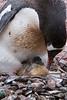 Birth of a Penguin 3