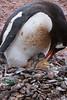 Birth of a Penguin 5
