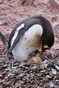 Birth of a Penguin 2