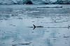 Antartica-00846