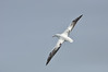 Wandering Albatross can have a wingspand over 11 feet.