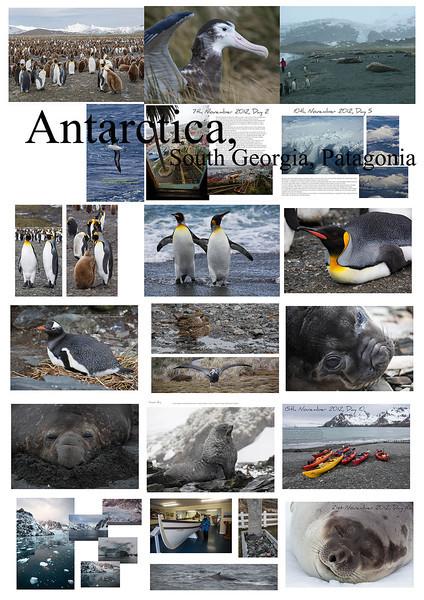 Antarctica, South Georgia