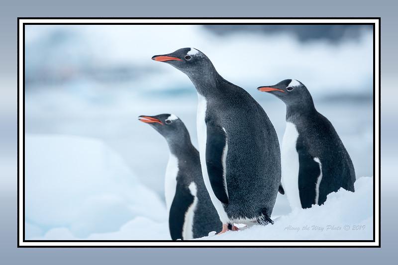 Antartica-BDR-161