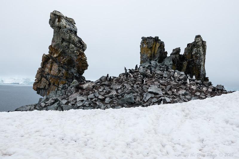 Antarctica-09184