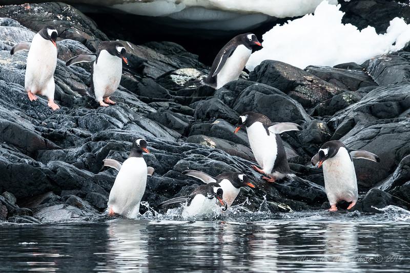 Antartica-00214