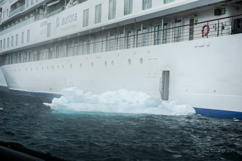 Antarctica-04275