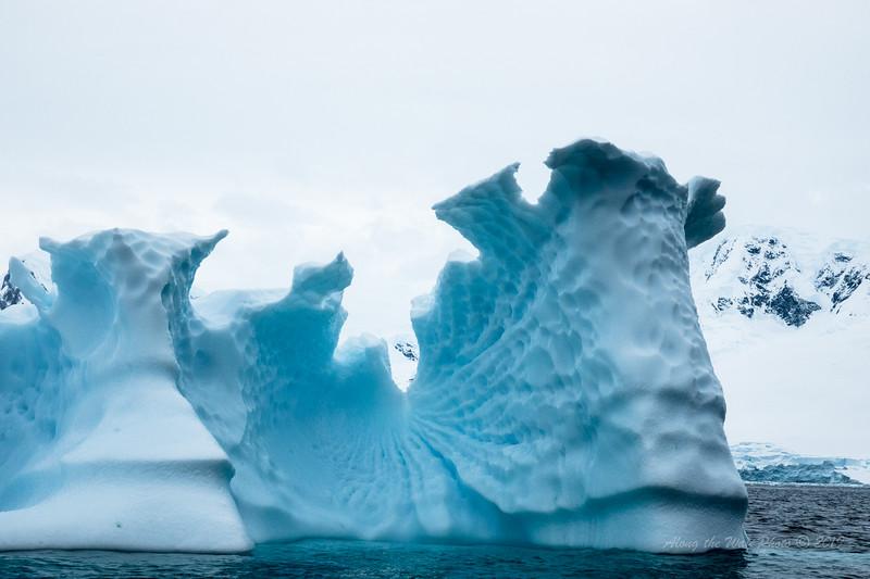 Antarctica-09803
