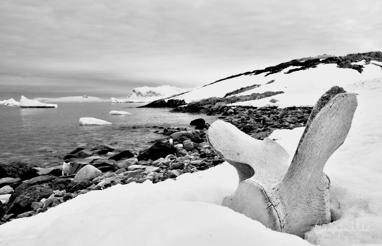 Whale bones on Cuverville Island 64°38'S  62°35'W