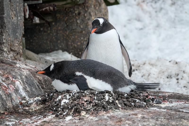 Antarctica-00618