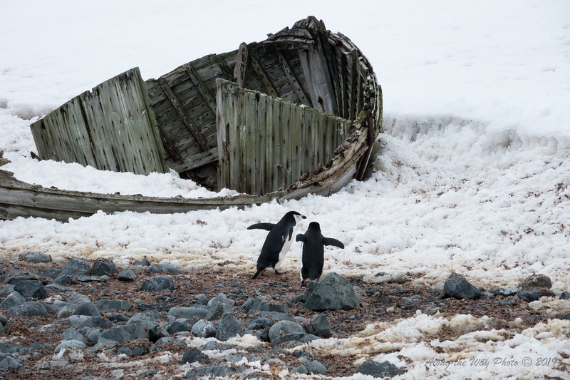 Antartica-09150