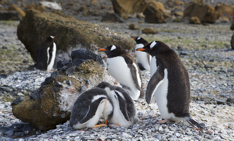Concerned Parents