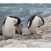 Antarctic Peninsula, Penguin Islands