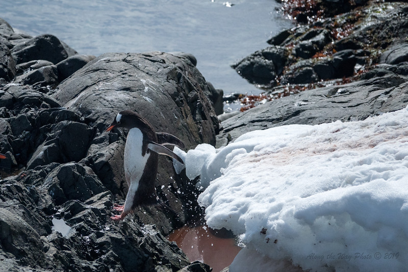 Antartica-00255