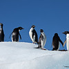 Look Everywhere!, Adellie Penquins, Devil Island, Antarctica