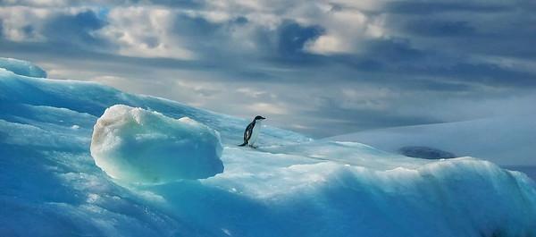 Adelie Penguin on an Iceberg near Brown's Bluff, Antarctica