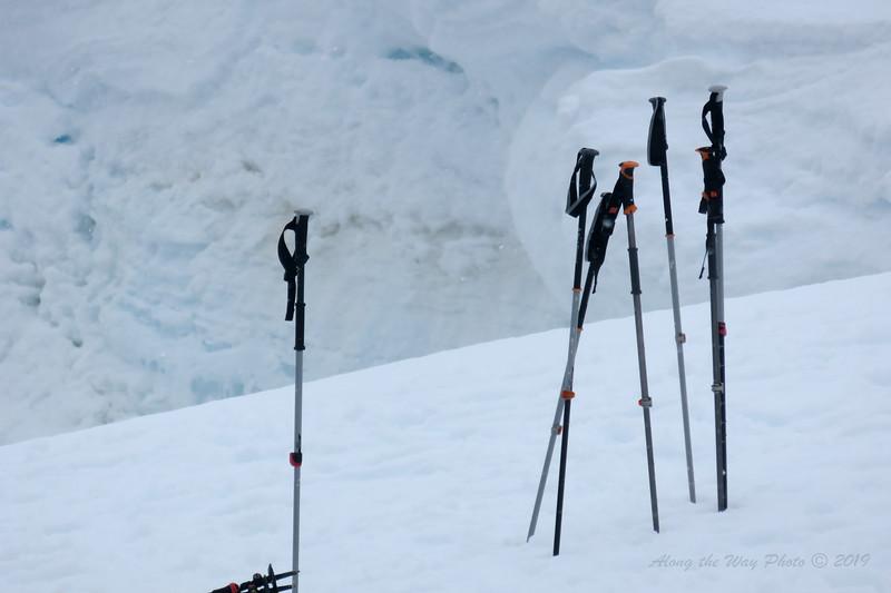 Antarctica-5584