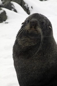 Wind and Whiskers - Antarctica