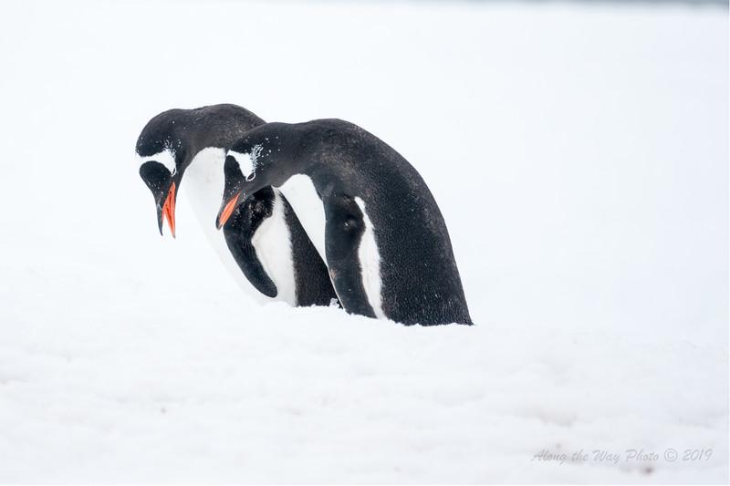 Antartica-00447