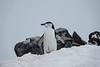 Antarctica-09169