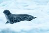 Antartica-09924