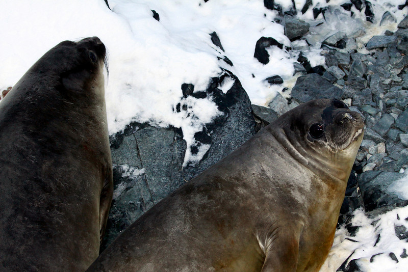 Odd Couple - Antarctica