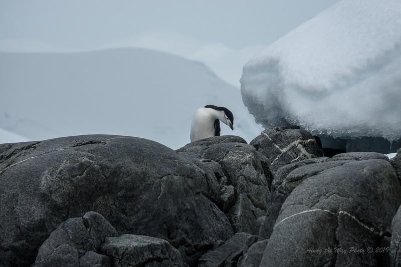 Antarctica-09738