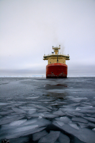Peering Into the Palmer - Antarctica
